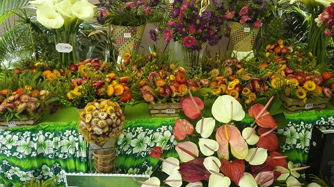 2019-png-flower-show